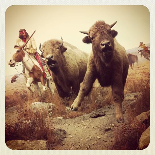 ManitobaMuseum_bison