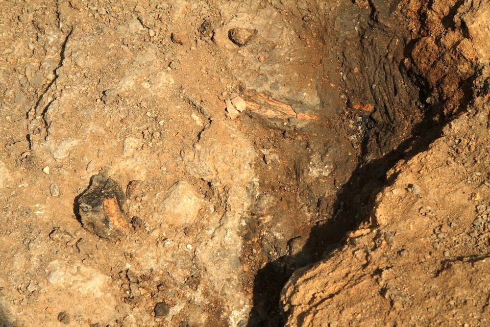 FossilDig8