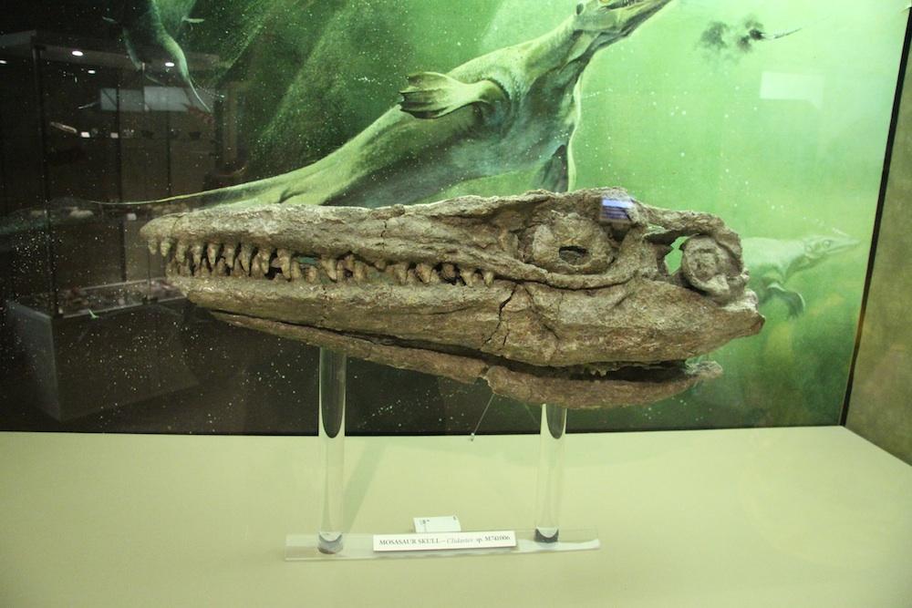 Mausosaur