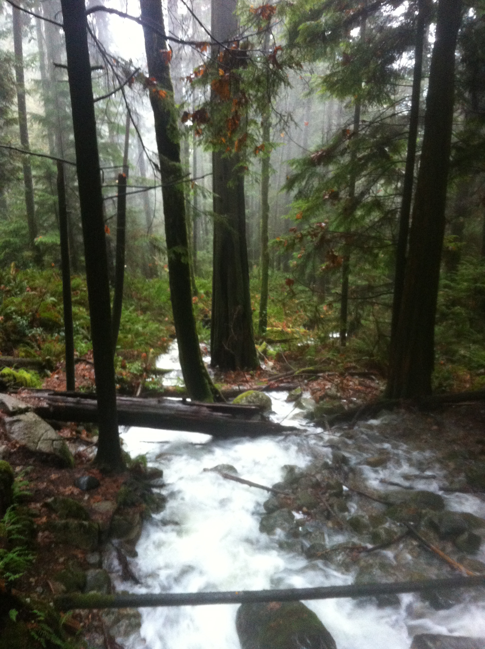 Baden Powell Trail on the way to Quarry Rock